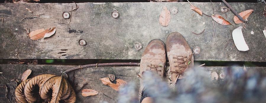 pensive picture of a boardwalk in costa rica